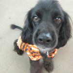 T&Tの営業犬 ブラッキーちゃん